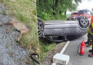 Žena se snažila vyhnout zajíci na silnici. Vybourala se a zvíře stejně zabila.