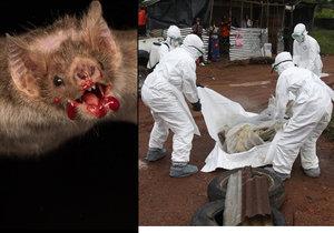 Příští smrtící pandemii nejspíš způsobí netopýří virus.