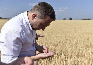 """Jurečka hlásí z pole: """"Sucho je katastrofální."""" Déšť už úrodu nezachrání"""