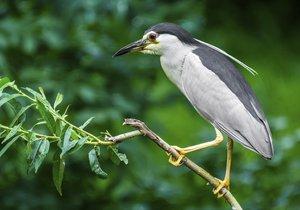Zoo Praha bude pozorovat noční lovce: Za den z metropole doletí až za Saharu