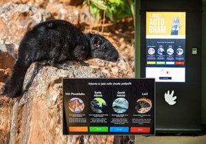 V Zoo Praha můžete podpořit zvířata: Nově se odvděčí otiskem packy