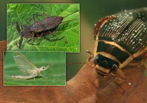 Objevte tajemný svět hmyzu!