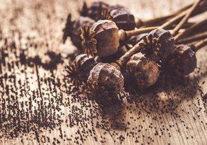 Česko platí za světovou velmoc ve výrobě potravinářského máku