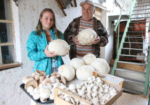 František Doležal z Uherského Ostrohu našel 7 obřích pýchavek, množství žampionů a bedlí. Vnučce Denise Peek, která za ním přijela až z Alabamy v USA, tak mohl připravit skvělé houbové řízky.