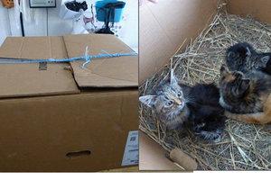 Tahle bezbranná koťátka někdo v zavázané krabici pohodil u supermarketu.