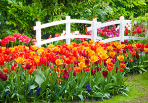 Při výsadbě můžete barvy namíchat anebo naopak rozzářit zahradu pestrými kontrasty.
