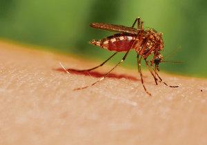 Komáři útočí! Co je přitahuje a odpuzuje?