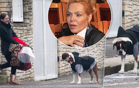 Dagmar Havlová v ohrožení: Útok agresivního psa!