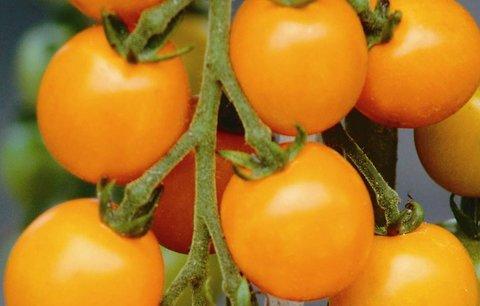 Bio zelenina nemá vitamíny, tvrdí vědci