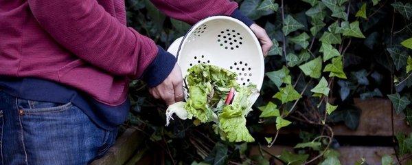 4 kroky, jak založit kvalitní kompost. Zužitkujete zbytky z kuchyně!