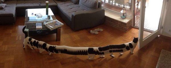 Stokočka v obýváku: Mňouká, má 16 párů nohou a baví se nad ní celý internet