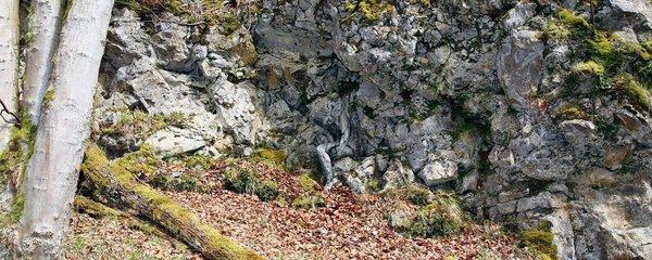 Najdete ji? Nahá modelka s dokonalými mimikry »zmizela« mezi stromy a skalami