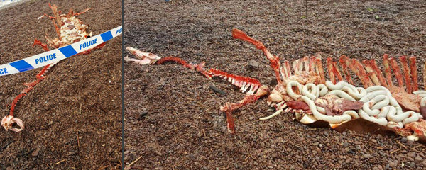 Děsivá lebka, kosti a vnitřnosti: Vyplavilo jezero mrtvolu lochnesské příšery?