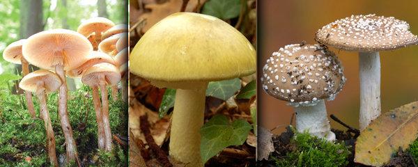 Sbírání hub není otrava, ale pozor na ty jedovaté. Těmto se vyhněte!