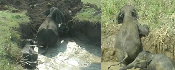 Dramatická záchrana: Slonice i se slůňátkem uvázla ve studni, pomoc přišla až za dva dny