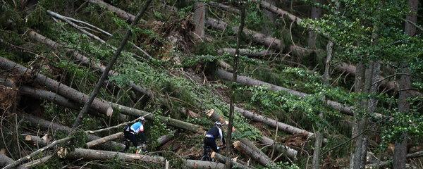 Na Šumavu nesmí turisté: Kvůli popadaným stromům zavírají oblast za oblastí
