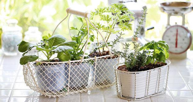 Bylinky pěstované za oknem nejčastěji umoříte vodou a průvanem.