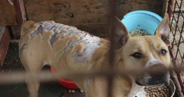 Majitelce odebrali psa popáleného louhem! Úřednice jí ho hned vrátila, Nová Paka zuří