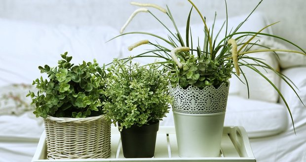 6 vět, které se vám pokojové rostliny snaží říct. Zachraňte je!