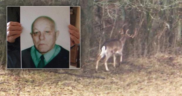 Muže zabil agresivní jelen: Lidé si podle zranění mysleli, že ho někdo ubodal