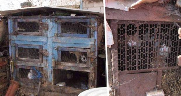 Dům hrůzy v Miloticích: Stařena chová desítky koček pozavíraných v králíkárnách plných výkalů.