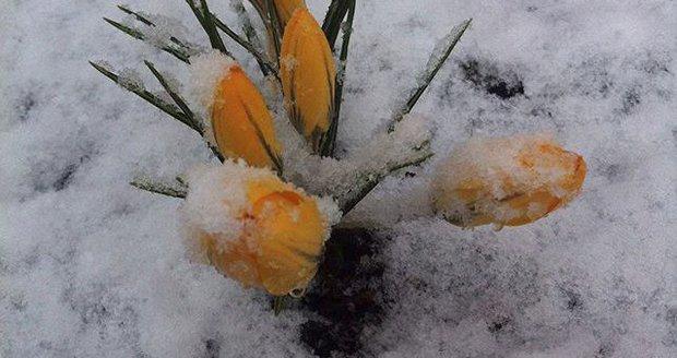 Padá sníh! Takto jej zachytili Češi na Instagramu
