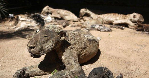 Šokující fotografie ze zoo zkázy.