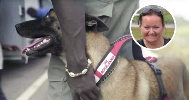 Češka vycvičila postrach pašeráků: Fenka v Africe hledá slonovinu i srst goril