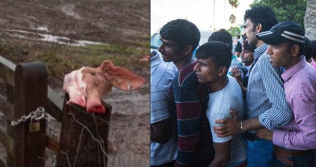 Muslimy na hranicích mají zarazit prasečí hlavy, navrhl euroslanec. Schytal to