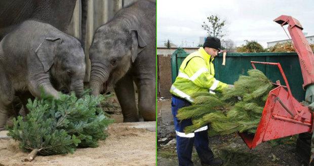 Kam s ním: Co s vánočním stromkem, když už dosloužil?