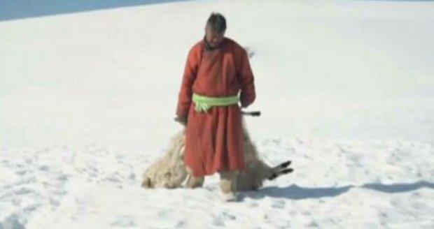 Mimořádně chladné počasí v Mongolsku si vyžádalo životy už 40 tisíc kusů dobytka.