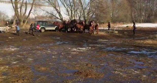 Na záběrech jednoho z dobrovolníků, které pořídil na mobilní telefon, je patrné, jak majitel najíždí autem do vlastních koní.