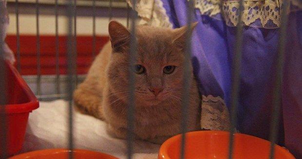 Výstava kočičích fešáků z útulku proběhne na Vinohradech: najdou nový domov?