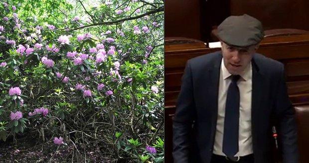 Irsko ohrožuje plíživý nepřítel. Politik chce na rododendrony povolat armádu