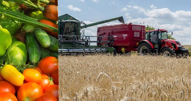 Češi dováží zeleninu za miliardy, zemědělci pěstují trávu. A ceny letí nahoru