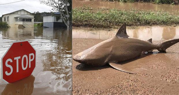 Žraločí tornádo v Austrálii? Úřady varují před predátory ve vodě ze záplav