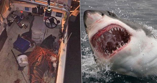 Lidožravý žralok bílý skočil rybáři přímo do bárky. Přežil jenom jeden z nich