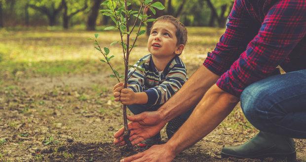 Kdy sázet stromy? odborník poradí!