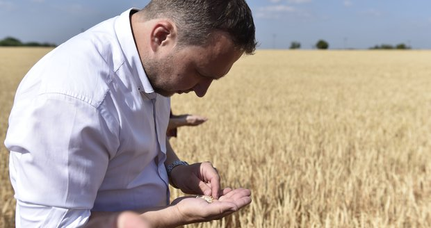 Jurečka je pro spojení ministerstev. Ekology děsí, že to pomůže velkým agrofirmám