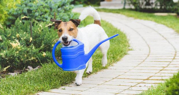 Pokud chcete, aby vám váš mazlíček zahradu nezničil, musíte ho vychovat.