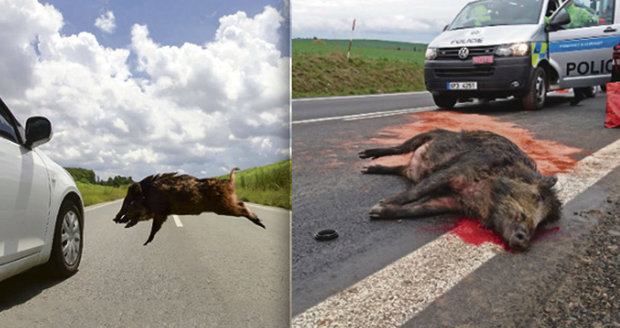 Zvířat na silnicích přibývá: Nejnebezpečnější jsou divočáci.