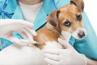 Očkování psů proti vzteklině je povinné  Praha 11 zajistí dva termíny  vakcinace c3afb32c05