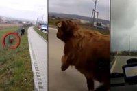 Nuda v Brn�?! Policist� honili po ulic�ch bizona!