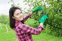Srpen na zahrad�: Vys�zejte nov� jahodn�ky, pro�e�te stromy a pohnojte tr�vn�k