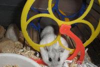 Nebezpečné zvířecí hračky z obchodů: Neohrožujete i vy život svého křečka?