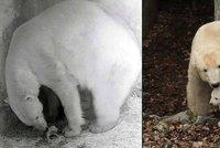 V medvědím brlohu je už asi nuda: Cora vodí nové mládě ven!