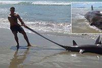 Čech na dovolené našel monstrum z hlubin: Ze vzácného žraloka jde strach