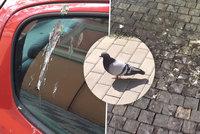 Praha pln� holub�ho trusu. Pad� na auta i na zahr�dky, nikdo to ne�e��