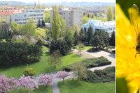 60 tis�c v�el na st�e�e hotelu ve Vyso�anech: Med budou sn�dat hotelov� host�