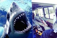 Žralok surfaři ukousl nohu, muž drsnému zranění nakonec podlehl
